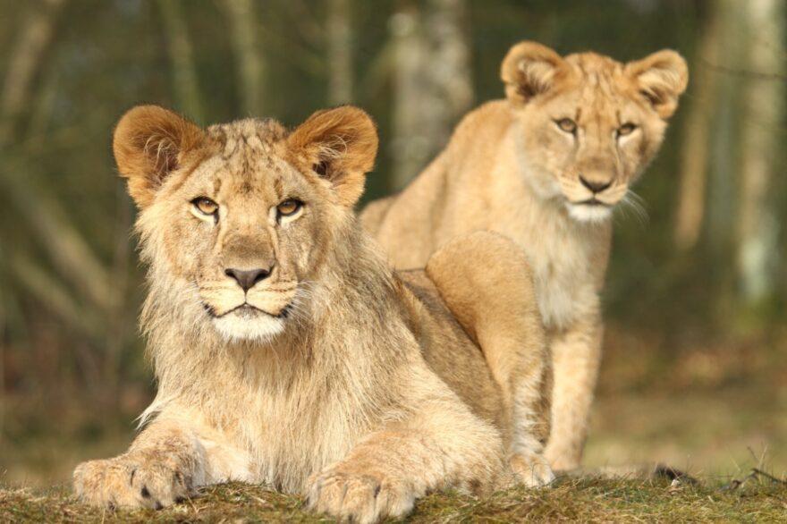 Løvebrøl og brillebjørne sætter rammen for fremtidens oplevelser i Vejle